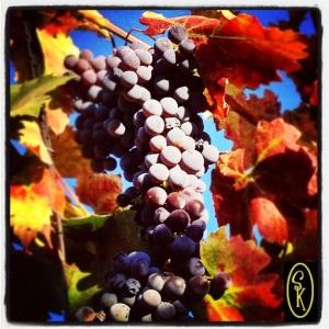 Grapes from www.SockmonkeysKitchen.com
