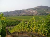 photo: Fiddlestix Winery,  courtesy of www.PrinceofPinot.com