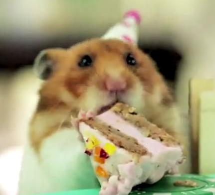 Tiny Hedgehog  has a tiny birthday